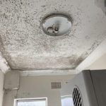 mould removal in Sydney